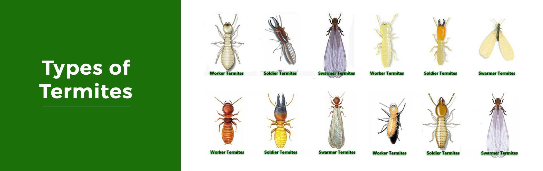 Termite Fumigation In Los Angeles Ca Termite Treatment